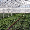 Green House Technology